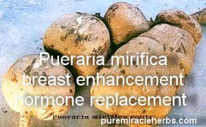 pueraria mirifica breast enlargement